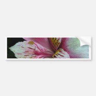 Peruansk Lily. Bildekal
