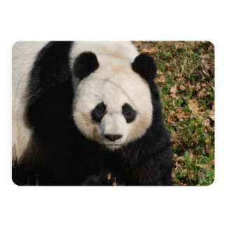 Petulant Pandabjörn 12,7 X 17,8 Cm Inbjudningskort