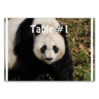 Petulant Pandabjörn Bordsnummer