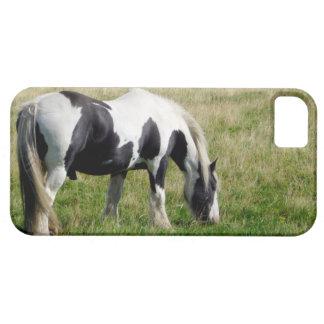 Piebaldhästen som betar på den gräs- backen, iPhone 5 skydd