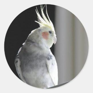 Pied Cockatiel Runt Klistermärke