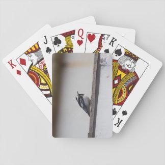 Pied Wagtail Casinokort