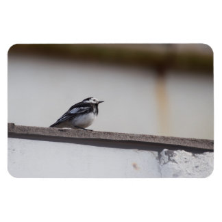 Pied Wagtail Magnet