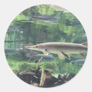 Pike fisk runt klistermärke