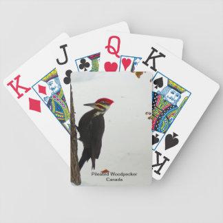Pileated hackspett som leker kort spelkort