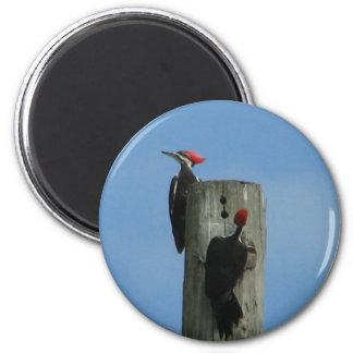 Pileated hackspettmagnet magnet