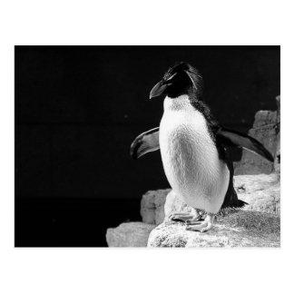 Pingvin i det svartvita fotoet för strålkastare vykort