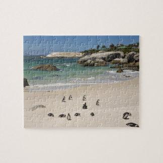 Pingvin på stenblockstranden, Simons Town som är s Pussel