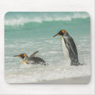Pingvin som simmar på stranden mus mattor