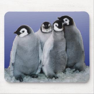 Pingvinbabyar Musmatta