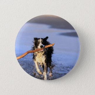 Pinne för hund för barngränscollie tilltalande på  standard knapp rund 5.7 cm