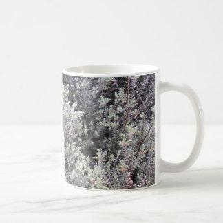 Pinophyta Kaffemugg