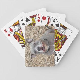 Pitbull lyckliga Sarge som leker kort Kortlek