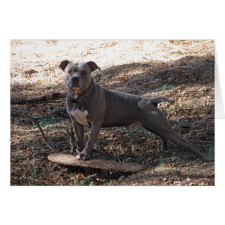 Pitbull med Skateboardfödelsedagkortet Hälsningskort