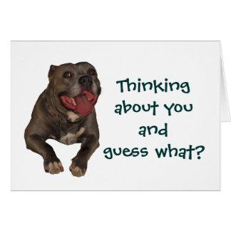 Pitbull som är tänkande om dig hälsningkort hälsningskort