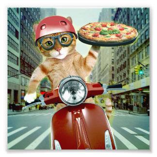 pizzakatt - katt - pizzaleverans fototryck