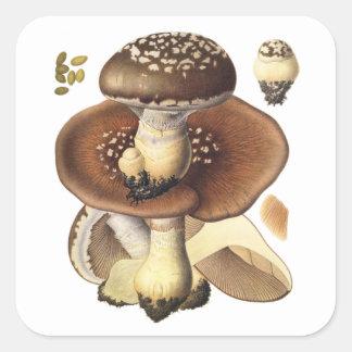 Plocka svamp den vetenskapliga champinjonen för fyrkantigt klistermärke