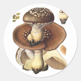 Plocka svamp den vetenskapliga champinjonen för runt klistermärke