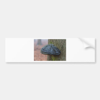 Plocka svamp på en trädstam i skogen bildekal