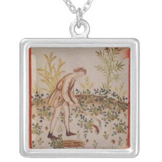 Plockningpalsternackar från 'Tacuinum Sanitatis Silverpläterat Halsband