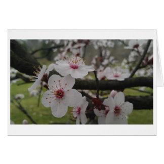 Plommonblommarhälsning Hälsningskort