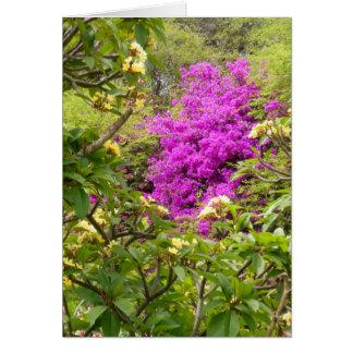 Plumeria och Bougainvillea Hälsningskort