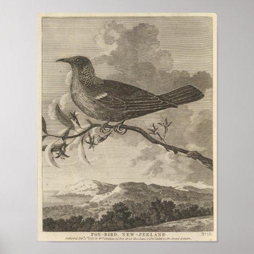 Poebird som är nyazeeländsk posters