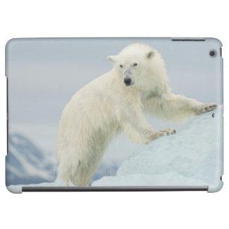 Polar björn i sommar