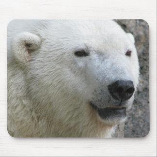 Polar björn musmatta