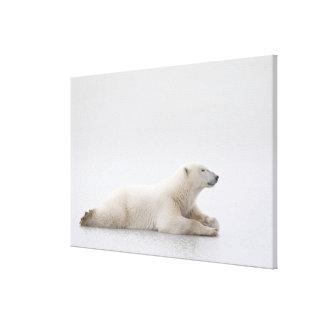 Polar björn som lägger på en sjö av is canvastryck