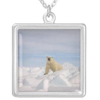 polar björn, Ursusmaritimus, i grov is på Silverpläterat Halsband