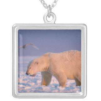polar björn, Ursusmaritimus, på is och snö, 3 Silverpläterat Halsband