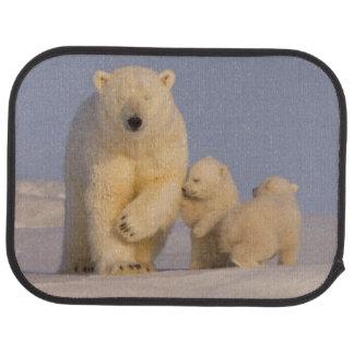 polar björn, Ursusmaritimus, sugga med nyfödda 3 Bilmatta