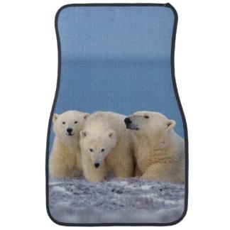 polar björn, Ursusmaritimus, sugga med ungar Bilmatta
