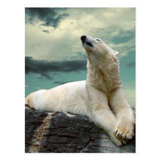 Polar björnjägare för vit på sten vykort