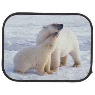 Polar björnsugga med ungen, packeis av bilmatta