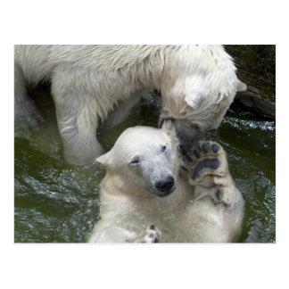 Polar uthärdar skämtsam stridighet vykort