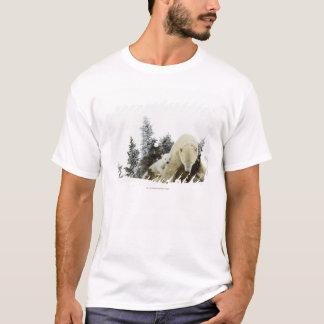 Polarbjörnar på den Wapusk nationalparken T Shirts