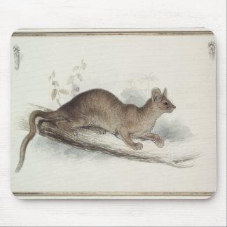 Polecaten, 19th århundrade musmatta
