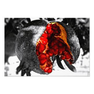 Pomegranate Fototryck