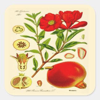 Pomegranate Fyrkantigt Klistermärke