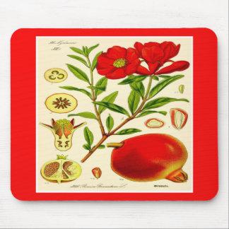 Pomegranate Musmatta