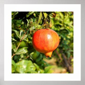 Pomegranate på träd i Spanien Poster