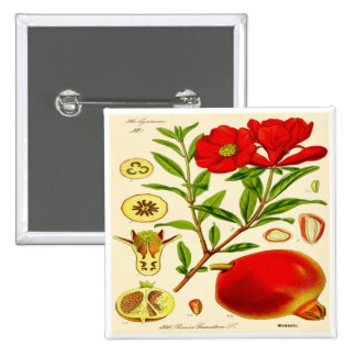 Pomegranate Standard Kanpp Fyrkantig 5.1 Cm