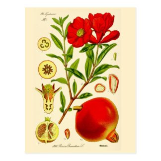 Pomegranate~-vykort Vykort
