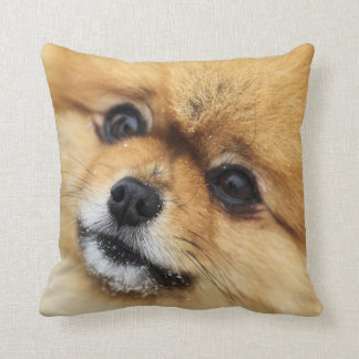 Pomeranian porträtt kudde