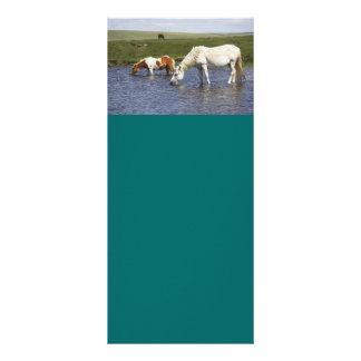 Ponnyer på att bevattna hålkuggekort reklamkort