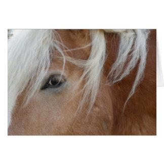 Ponnyhälsningkort Hälsningskort