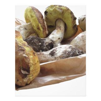Porcini champinjoner som isoleras på vitbakgrund brevhuvud