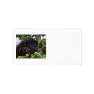 porcupine adressetikett